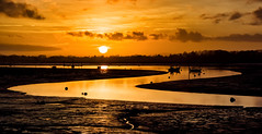 Bit of a Twist (Solent Poster) Tags: emsworth harbour pentax k1 hampshire coastal path seascape landscape sunset sunrise low tide december 2016 60250mm