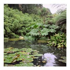 Pond (ngbrx) Tags: lostgardensofheligan cornwall england teich natur nature pflanzen gewässer seerosen uk united kingdom königreich vereinigtes great grossbritannien britain garten heligan