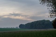 Foggy Morning (Tom Zander) Tags: wood woods forest wald wälder landschaft landscape nebel nebelig wolken wolke sky himmel clouds cloud nikon nikkor d5100 tree trees baum bäume morning morgen wiese wiesen feld felder fog foggy