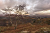 Holme Fell (breddenphoto) Tags: trees tree lonetree holmefell coniston langdale cumbria england visitengland sunrise clouds mountain mountains mountainside colour skies adventure fellwalker fells hiking camping