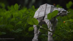 A little snap (Alexandré Nuarin) Tags: starwars stormtrooper365 stormtrooper starwarsv starwarsvi snow starwarsiv starwarsforceawakens a atat anewhope nature macro battlefront tatooine endor empirestrikesback toyphotography toydiscovery tree toys return jedi goliath
