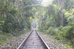 DSC_0066 (mahabuburlimon) Tags: lawachara forest srimangal