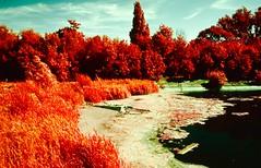 Dreamscape (1) (Tonepome42) Tags: landscape dreamscape colour colourinfrared infrared slide slidefilm kodak ektachrome nature nikon nikonfe nikkor24mm wideangle photo photography london westlondon barnes sw13 england psych psychedelic water pond lake sky dream dreamy unitedkingdom