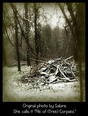 Photo by Sabine (vidalia_11) Tags: nature outdoors trees sticks ribbet