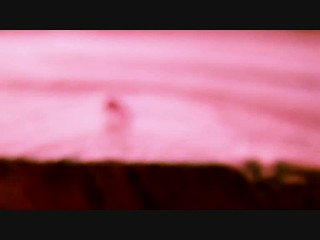 springtail grazing video