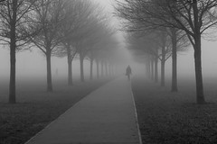 Camu o'r niwl: Caeau Pontcanna / Out of the mist: Pontcanna Fields, Cardiff (Dai Lygad) Tags: misty pontcannafields cardiff trees lines figure inthemist winter fog noiretblanc moody atmospheric photos photographs pictures images gloomy black white walking canon camera 550d eos sigmalens jeremysegrott dailygad pontcanna park treelined paysdegalles uk path january wintry scene morning outside human day britain nice creativecommons attributionlicense attributionlicence geotagged walk bnw perspective grey commuting commute hiver brouillard janvier dernebel météo walktowork freetouse foggy overcast forblog forwebsite websiteimage blogimage blogphoto websitephoto pechakucha 20x20 noir welsh caerdydd cymru