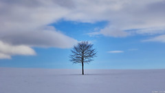 The lonely tree (MGRfoto) Tags: baum tree lonelytree treeinthesnow wintertree