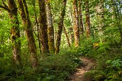 Forest III, Aldrich Butte (rowjimmy76) Tags: trees nature forest landscape outdoors washington butte hiking columbia vegetation pacificnorthwest gorge pnw aldrich canonef50mmf14usm 5dm2 5dmii