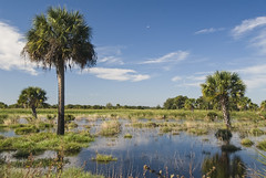 Florida Wetlands (USDAgov) Tags: oregon florida conservation wetlands everglades usfishandwildlifeservice ranchers nrcs endangeredspeciesact landowners acep farmbill wetlandsreserveprogram foodfarmandjobsbill agriculturalconservationeasementprogram