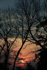 Cliche Sunset (f u oscar) Tags: trees sunset clouds