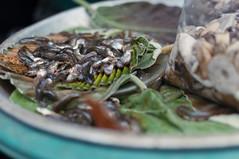 tadpoles / July / 2015 / Khon Kaen, Thailand (gudiodotdotdot) Tags: thailand nikon market tadpoles khonkaen thaifood d5000 thaiisan