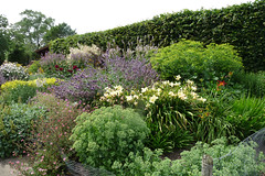 Herbaceous border, Lower Lovetts Farm (3) (karenblakeman) Tags: uk reading july berkshire knowlhill 2015 herbaceousborder organickitchengarden readingfoodgrowingnetwork rfgn lowerlovettsfarm
