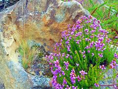 jardn entre rocas. (Luis M) Tags: rocas hondarribia jaizkibel bidasoatxingudi