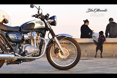 W800 bluottocento (michele franzese) Tags: w800 forum kawasaki moto bike motorcycle ride streetphoto motocicletta barcelona blu blue motori panasonic lumix gx8 lumixg rueda vehículo