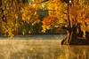 MORNING. (NIKONIANO) Tags: árbol árboles surreal sabino ahuehuete méxico lago lagodeméxico lagosdeméxico