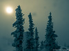 Twilight (clemens.adolphs) Tags: snow splittone trees winter