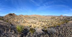 Chihuahuan Desert Landscape (BongoInc) Tags: bigbendnationalpark chihuahuandesert westtexas cactus desertlandscape