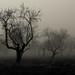 The Dark Forest Choreography