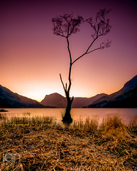 Lone Tree (ianbrodie1) Tags: buttermere lake district tree lone sunrise mountains colour branches glow sillouette