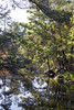 Autumn view (Martijn A) Tags: autumn herfst herbst trees bomen leaves bladeren fall color kleur nature natuur water reflection reflectie sun zon canon d550 dslr 35mm lens wwwgevoeligeplatennl