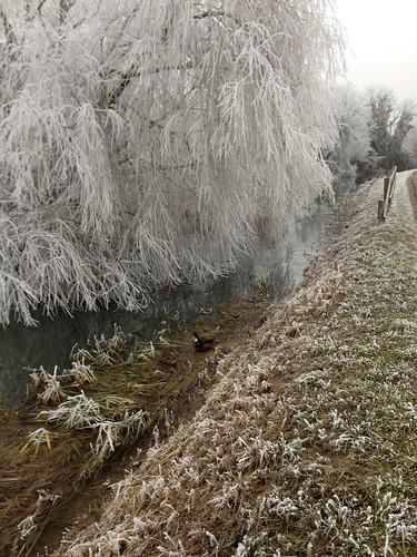 Pendant ce temps-là dans la brume, les canards se gèlent...