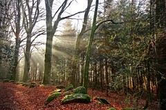 Lumière automnale (Marc ALMECIJA) Tags: wood ray light automne tarn france extérieur paysage forêt arbre calme