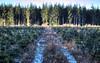 Boh180 (Svendborgphoto) Tags: bokeh denmark dof d800 nikkor 180mm ais 180ed nature nikkorais f28