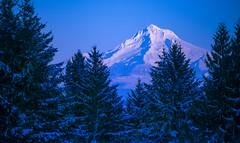 Snow covered Mt Hood glows pink in the light of a January sunset (GeorgeOfTheGorge) Tags: january snowcovered oregon winter twilight lastlight blueandpink sunsetlight lastlightdeparts cascademountain coopermountain mountainpeak dusk hat f