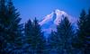 Snow covered Mt Hood glows pink in the light of a January sunset (GeorgeOfTheGorge) Tags: january snowcovered oregon winter twilight lastlight blueandpink sunsetlight lastlightdeparts cascademountain coopermountain mountainpeak dusk
