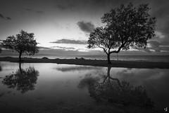 Reflections (tzevang.com) Tags: sea bwseascape gythio greece reflection tree water mavrovouni sky afterrain