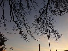 Ζαγκρεμπ Κροατια P1240527 (omirou56) Tags: 43ratio panasoniclumixdmctz40 silhouette sky sunset tree ουρανοσ δεντρο σιλουετεσ δυσηηλιου