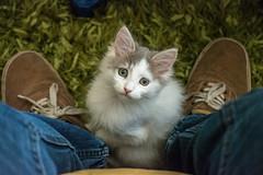 Callie (leoleamunoz) Tags: cat gata mascota pet animal