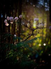 Morning Light (jayneboo) Tags: 365 morning light low bokeh shrubs leaves trees garden odc