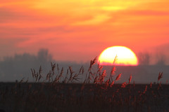 Brabantsche Biesbosch - Loswal (merijnloeve) Tags: brabantsche biesbosch galeiwaard natuur noordbrabant landschap landscape dutch netherlands sunset sunrise zonsopkomst serene nature