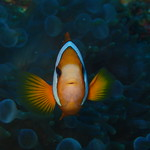 Diving Raja Ampat thumbnail