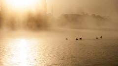 Marais Goulainais (Marc Menon) Tags: soleil lumire marais oiseau brume matin