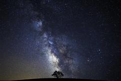 Solitary | Paso Robles, California (jamesbrandon) Tags: california longexposure tree stars alone galaxy astrophotography nightsky winecountry pasorobles celestial milkyway unitesstates sonyalpha