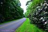 Rhoads of the BRP Road (tripod_treker) Tags: godscreations blueridgeparkway