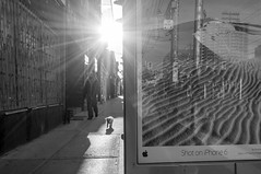 Bus Shelter (PureWest) Tags: street morning bw dog sun toronto sunrise ttc sidewalk queenstreet