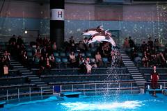 IMG_8063 (Jun.Ohashi) Tags: aquaparkshinagawa aquarium shinagawa アクアパーク品川 品川 水族館 港区 東京都 日本 jp canon キャノン eos eos6d tamronspaf2875mmf28xrdildasphericalifmacroa09 tamron タムロン sp 2875mm f28 di ld aspherical if macro a09