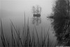 _misty (l--o-o--kin thru) Tags: vreden zwillbrock venn explore explored tristesse melancholie nebel mist fog