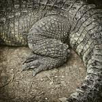 Reptile thumbnail