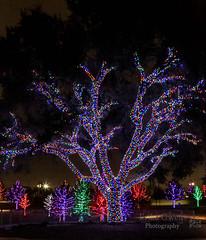 Vitruvian Park (erika348) Tags: 365photochallenge christmaslights vitruvianpark