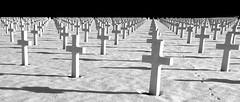 GEORGE S. THOMAS (Bim Bom) Tags: soldiers cemetery tombstones graveyard war warmemorial liège belgium wallonia