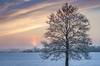 Sunrise over Piątnica - wschód słońca nad Piątnicą (* mariozysk *) Tags: snow winter tree trees field covered sunrise sun clouds blue sky misty look frost ground frozen śnieg zima drzewo drzewa wschód słońca niebo chmury