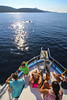 Dolphins (Kornati Excursions) Tags: kornatiexcursions kornati npkornati izletinakornate mikado zadar wwwmikadotourscom tours national park boattrip boat water summer dolphins