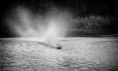 Spraying rc-boat (explored) (Ruud.) Tags: ruudschreuder nikon nikond810 d810 bw zwartwit monochrome blackandwhite blackwhite silverefex speedboot speedboat rc controlled radio control remote afstand bestuurbaar tolbergvijver roosendaal 7100 750 3200 water race racing spray rcboat rcboats speed snelheid aktie action aktion nl233 powerboats west brabant panning spraying