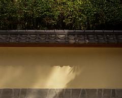 Shadows on the wall (Tim Ravenscroft) Tags: wall shadows japanese morikami gardens florida usa delraybeach