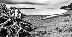 Picnic Point Beach Stump (rich trinter photos) Tags: picnicpoint landscape beach shoreline driftwood pugetsound slowshutterspeed longexposure