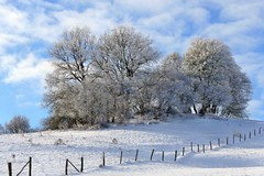 Winter in der Eifel (mama knipst!) Tags: baum tree winter schnee frost eifel januar